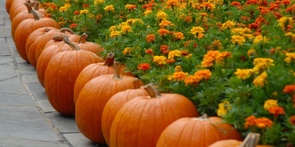 Halloween Events & Fall Festivals in Columbus, GA area